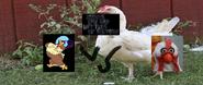 Clara cluck vs camilla the chicken