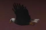 Bald Eagle Cameo Steven Spielberg vs Alfred Hitchcock