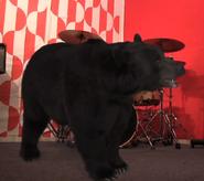 Announcer as American Black Bear