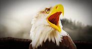 Abraham Lincoln's Eagle
