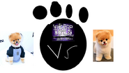 Jerb jiffpom vs boo the world's cutest dog