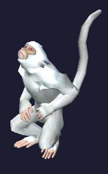 Race monkey.jpg