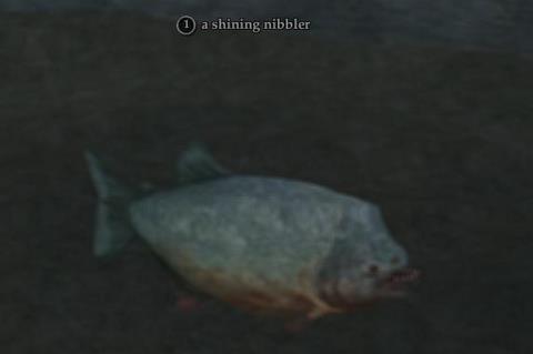 Shining nibbler (Castleview Hamlet)
