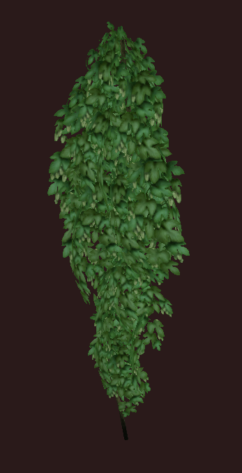 Healthy Hops Vine