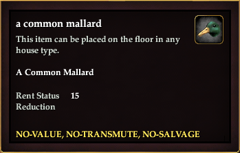 A common mallard