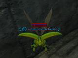 A deathwatch beetle