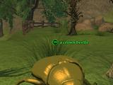 A crown beetle