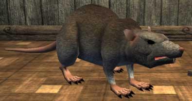 Race rat.jpg