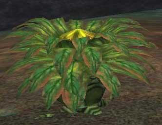 Race carnivorous plant.jpg