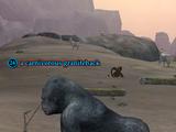 A carnivorous graniteback
