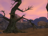 The Shadowed Grove