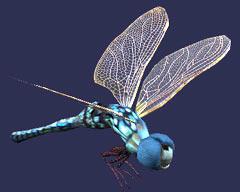 Race dragonfly.jpg