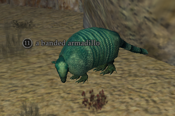 A banded armadillo