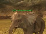 A War Elephant juvenile