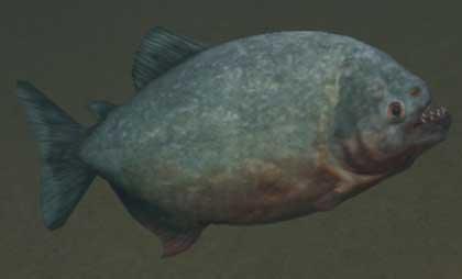 Race piranha.jpg
