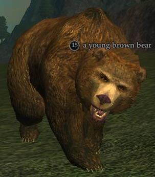 A young brown bear