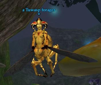 A Tuwasp forager