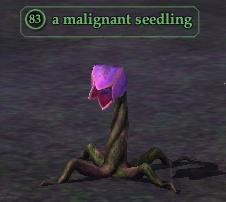 A malignant seedling