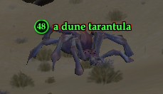 A dune tarantula
