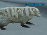 An arctic badger