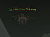 A voracious Nek wasp