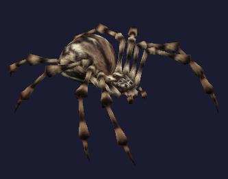 Race spider.jpg