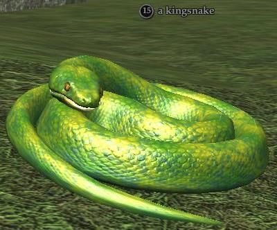 A kingsnake