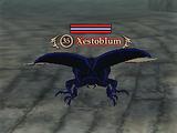 Xestoblum