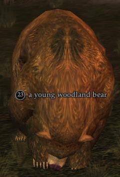 A young woodland bear
