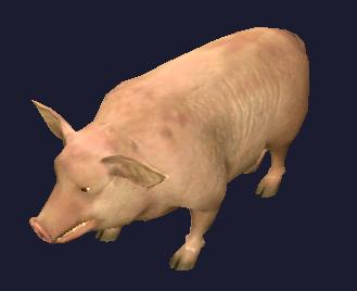 A common farm pig