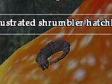 A frustrated shrumbler hatchling