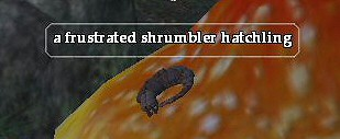 A frustrated shrumbler hatchling