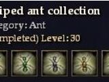 Striped ant collection