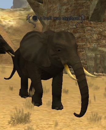 A bull war elephant