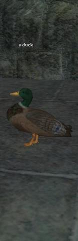 A duck (CH)
