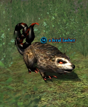 A feral lasher