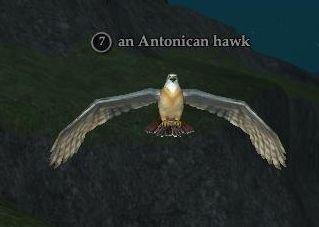An Antonican hawk