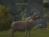 A backwoods stag