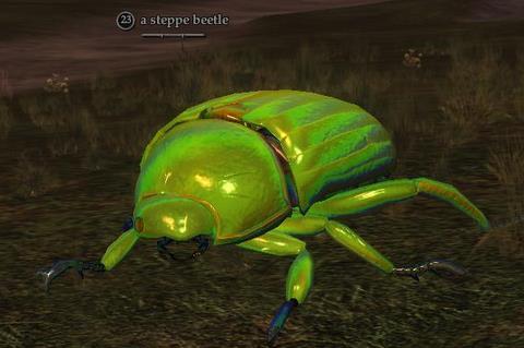 A steppe beetle