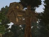 Arbos, the Elddar Tree