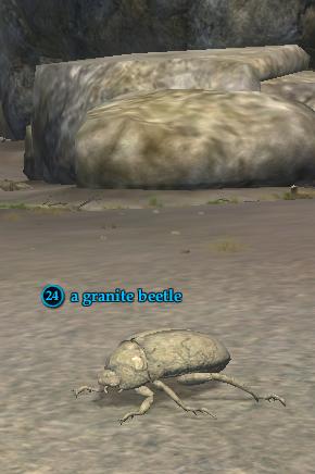 A granite beetle