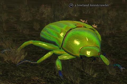 A lowland forestcrawler