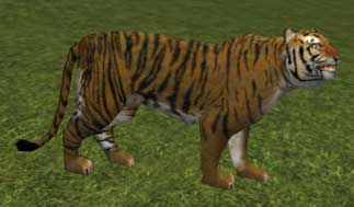 Race tiger.jpg