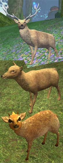 Race deer.jpg