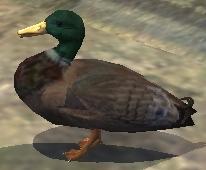 A duck (CL)