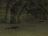 The Croc Caves