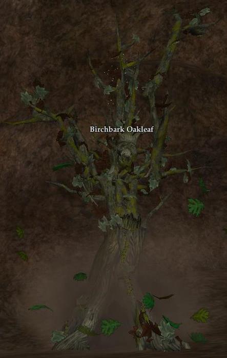 Birchbark Oakleaf