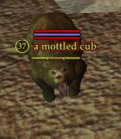 A mottled cub