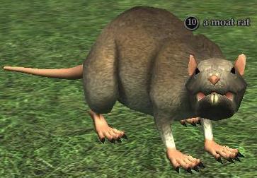 A moat rat