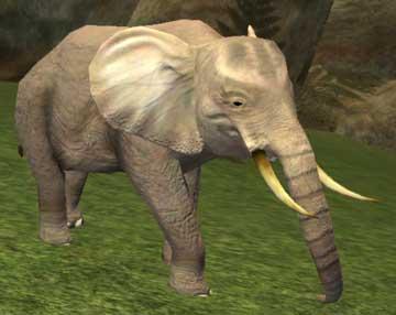 Race elephant.jpg